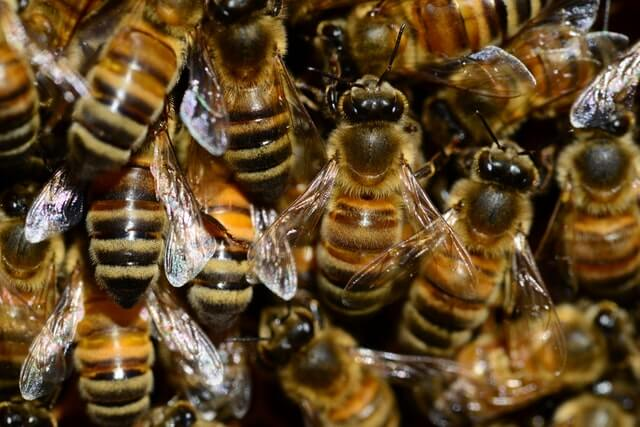 19++ Will bees move into an empty hive ideas